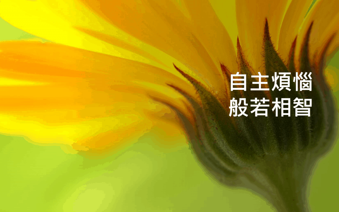 白話佛法網路講座(14) 自主煩惱,般若相智